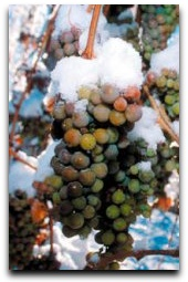 Ice Wine, Ohio wineries, Ohio Booze Blog